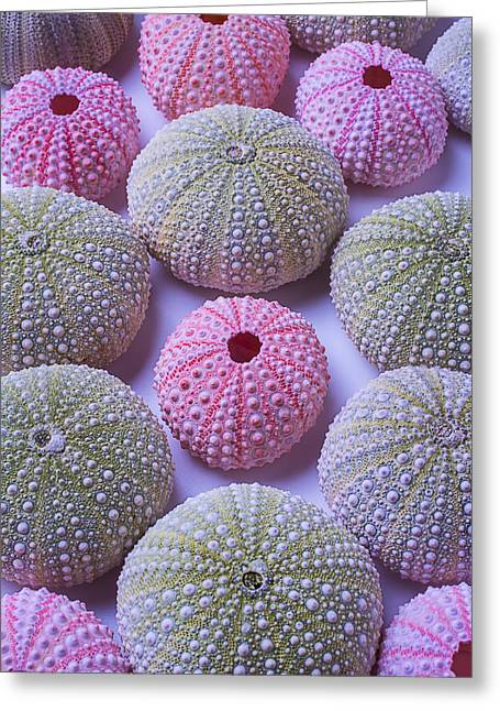 Sea Urchins Greeting Cards - Pink And Green Urchins Greeting Card by Garry Gay