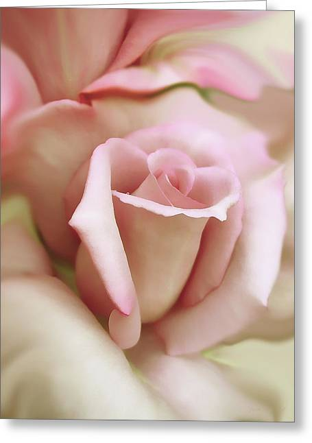 Ivory Roses Greeting Cards - Pink and Ivory Rose Portrait Greeting Card by Jennie Marie Schell
