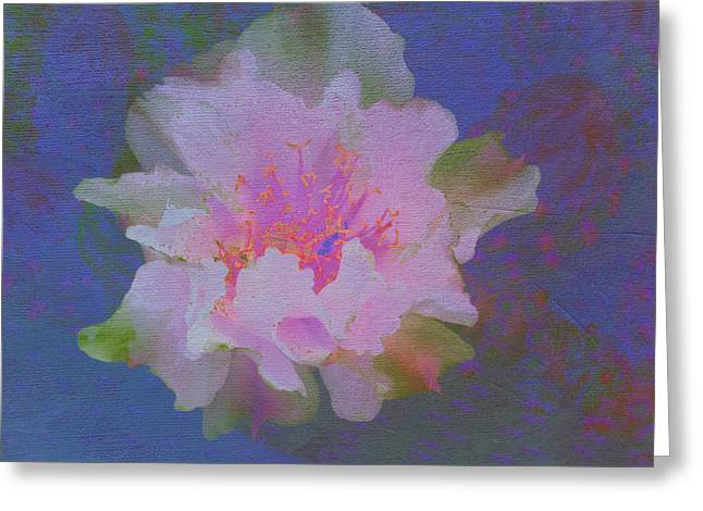 City Art Greeting Cards - Pink and Prickly Greeting Card by Linda Dunn