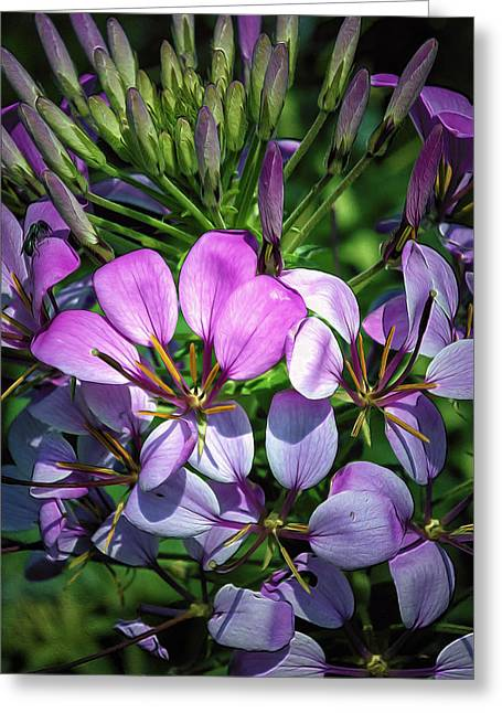 Painted Details Digital Art Greeting Cards - Pink and Purple Floral Pallete Greeting Card by Bill Tiepelman