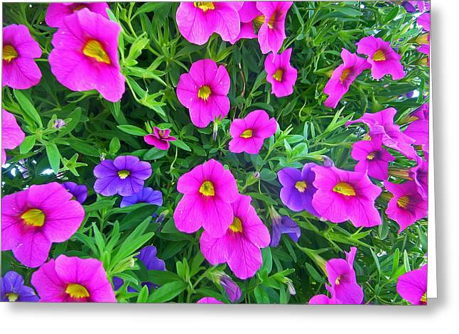 Greens Greeting Cards - Pink and Purple Petunias Greeting Card by Aimee L Maher Photography and Art
