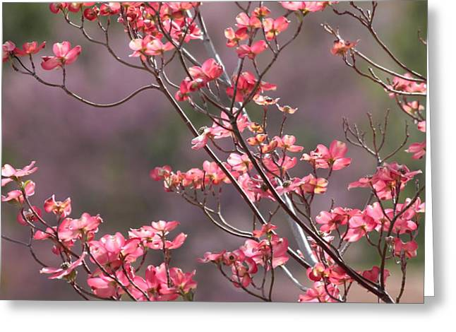 Pink and Purple Spring Trees Greeting Card by Carol Groenen