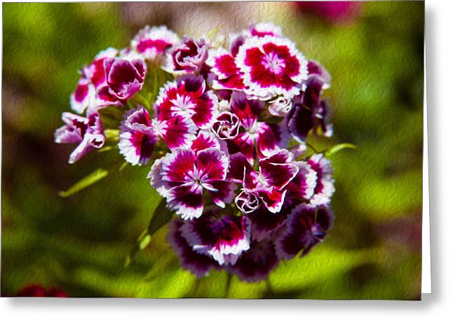 Wolf Creek Greeting Cards - Pink and White Carnations Greeting Card by Omaste Witkowski