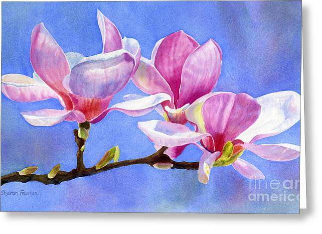 Pink Flower Branch Greeting Cards - Pink and White Magnolias with Background Greeting Card by Sharon Freeman