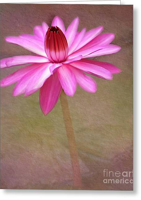 Hawaiian Pond Greeting Cards - Pink Arabesque Greeting Card by Sabrina L Ryan