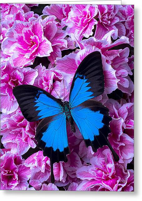 Pink Blossoms Greeting Cards - Pink Azaleas and Blue Butterfly Greeting Card by Garry Gay