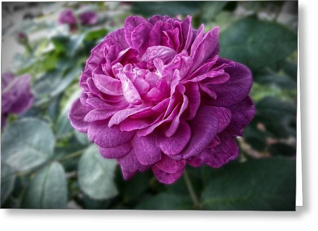 Garden Scene Greeting Cards - Pink Beauty Greeting Card by Linda Unger