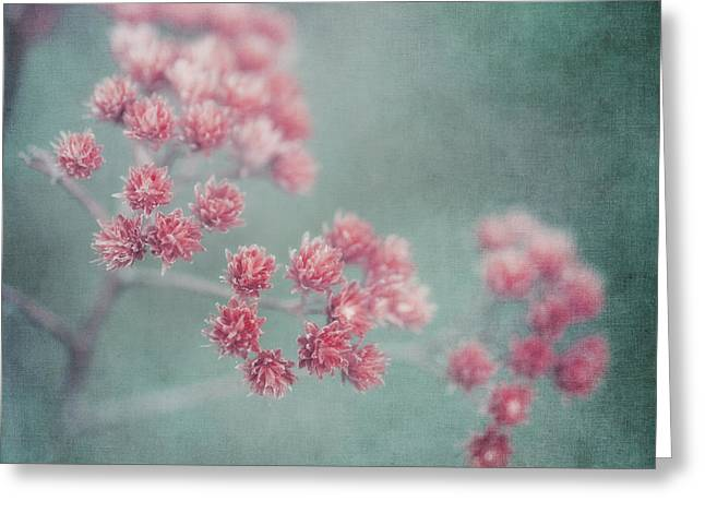 Texture Flower Greeting Cards - Pink Beauty Greeting Card by Priska Wettstein
