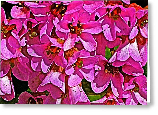 Escapees Photographs Greeting Cards - Pink Begonia in Park Sierra near Coarsegold-California  Greeting Card by Ruth Hager