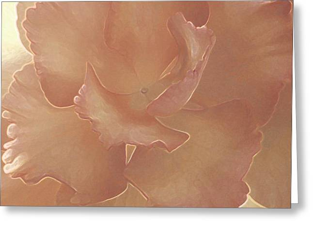 Pink Begonia Greeting Card by Jo-Anna Pippen