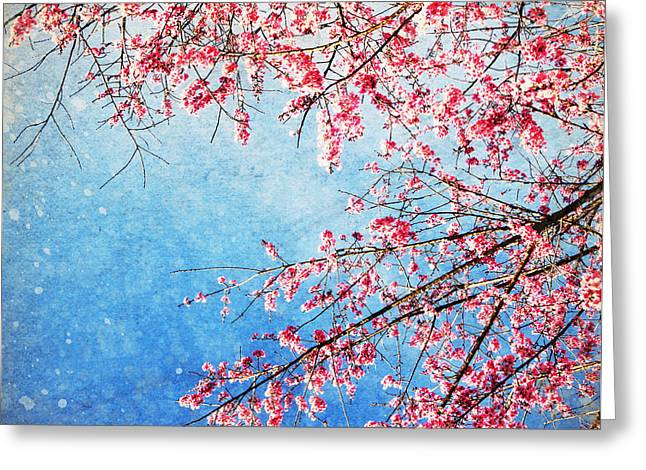 Pink Flower Branch Greeting Cards - Pink blossom Greeting Card by Setsiri Silapasuwanchai