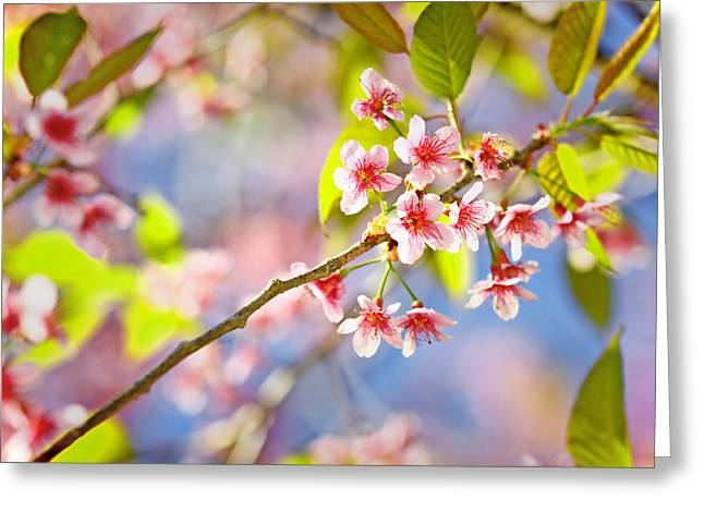 Pink Blossom Greeting Card by Suradej Chuephanich