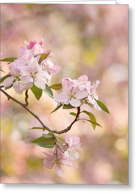 Kim Photographs Greeting Cards - Pink Blossoms Greeting Card by Kim Hojnacki