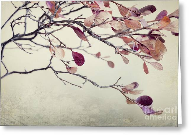 Leafs Greeting Cards - Pink Blueberry Leaves Greeting Card by Priska Wettstein