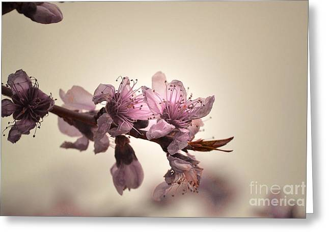 Pink Flower Prints Greeting Cards - Pink Branch Bloom Greeting Card by Andrea Hazel Ihlefeld
