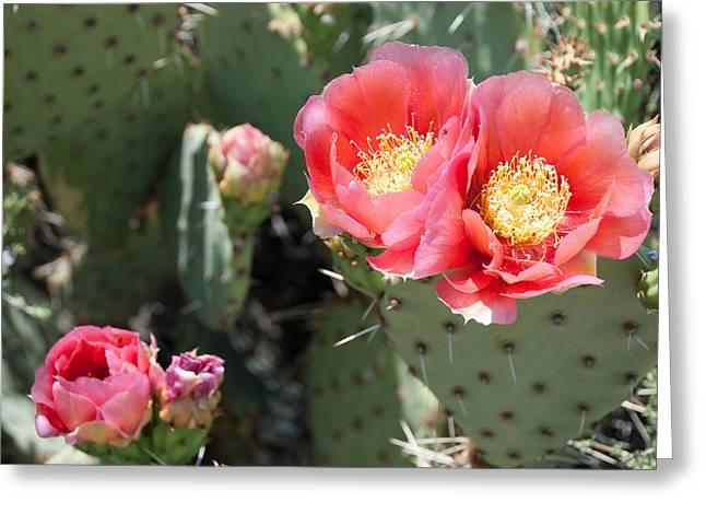 Geobob Greeting Cards - Pink Cactus Flower Rockville Utah Greeting Card by Robert Ford