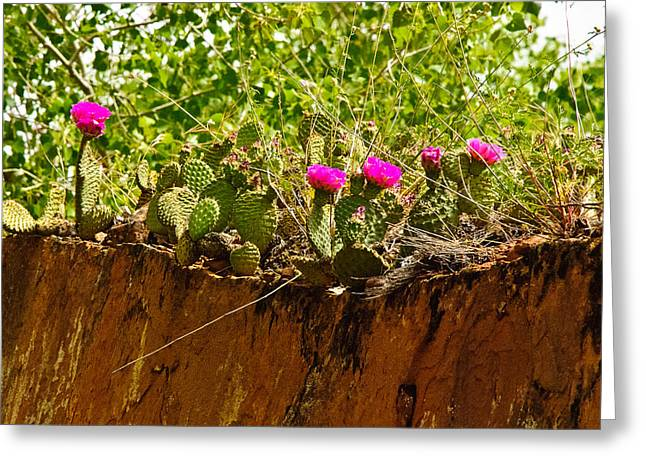 Geobob Greeting Cards - Pink Cactus Flowers on Red Rock Zion National Park Utah Greeting Card by Robert Ford