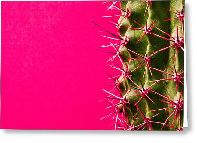 Wild Orchards Greeting Cards - Pink Cactus Greeting Card by Jonas Leonas