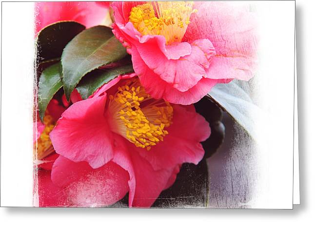 Pink Camellia. Elegant KnickKnacks Greeting Card by Jenny Rainbow