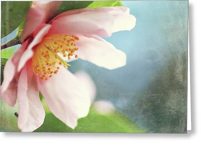 Pink Camellia Greeting Card by Sylvia Cook