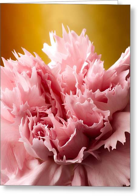 Pink Gold Flora Greeting Cards - Pink Carnation Greeting Card by Daniel Csoka
