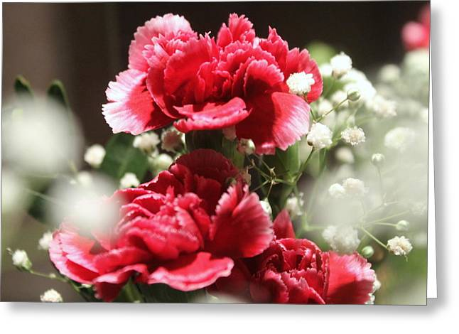 Babys Breaths Greeting Cards - Pink Carnations Greeting Card by Rebecca Davis