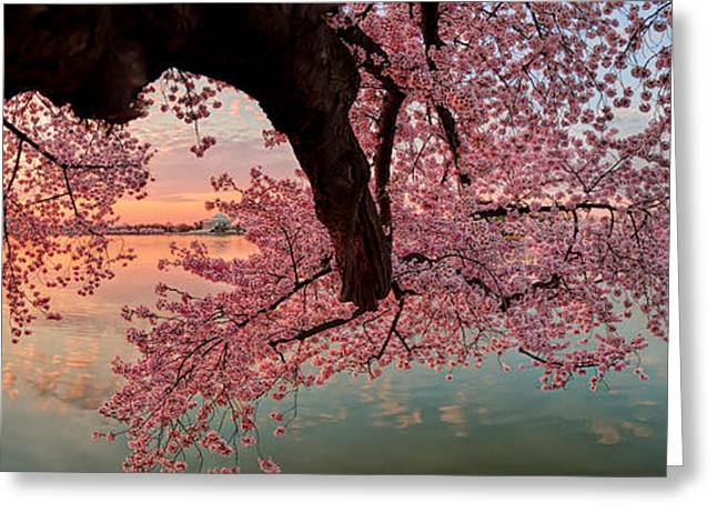 Tidal Photographs Greeting Cards - Pink Cherry Blossom Sunrise Greeting Card by Metro DC Photography
