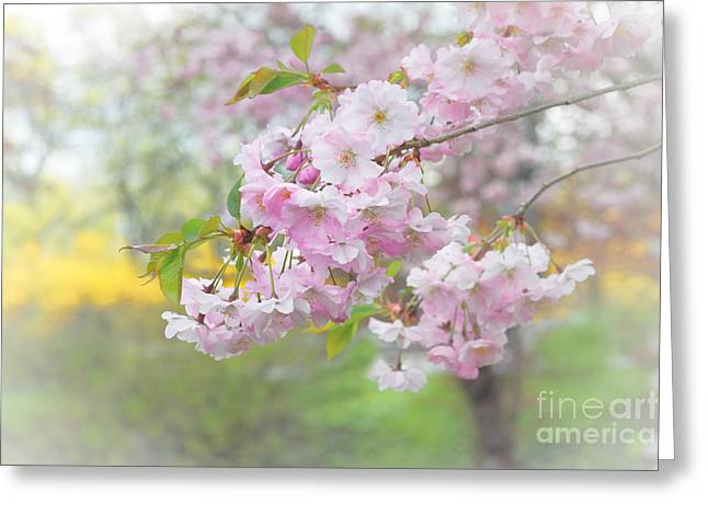 Pink Flower Branch Greeting Cards - Pink Cherry Blossoms Greeting Card by Charline Xia