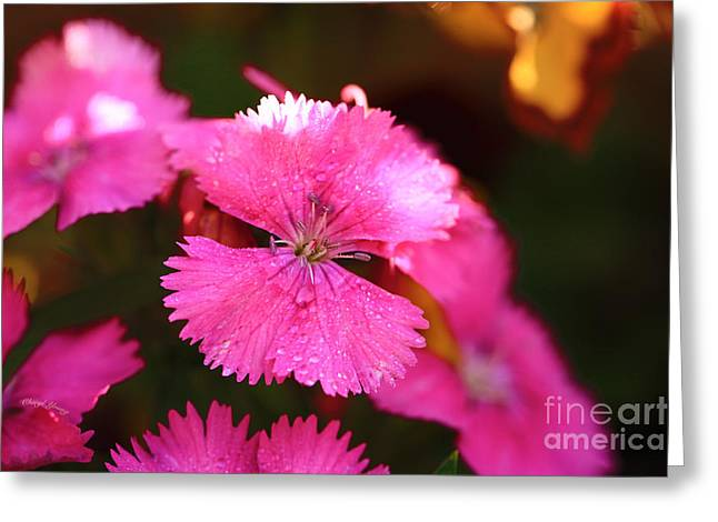 Dew Covered Flower Greeting Cards - Pink Greeting Card by Cheryl Young