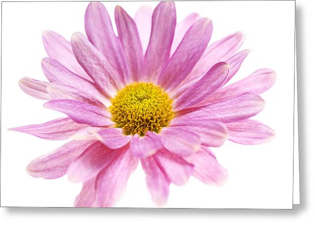 Pink Chrysanthemums Greeting Cards - Pink Chrysanthemum Greeting Card by Vishwanath Bhat