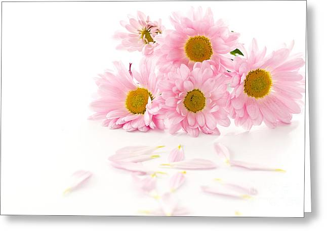 Pink Chrysanthemums Beautiful Greeting Card by Boon Mee