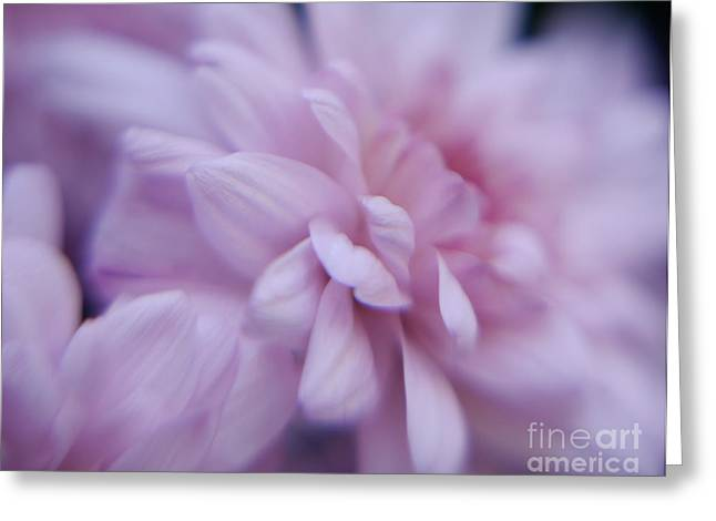 Pink Chrysanthemums Greeting Cards - Pink Chrysanthemums Greeting Card by Irina Wardas