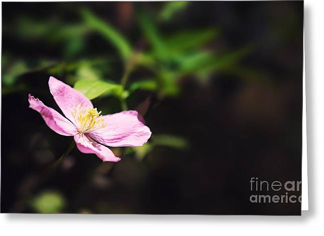 Pink clematis in sunlight Greeting Card by Jane Rix