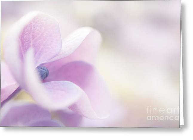 Close Focus Floral Greeting Cards - Pink Cloud Greeting Card by Anne Gilbert