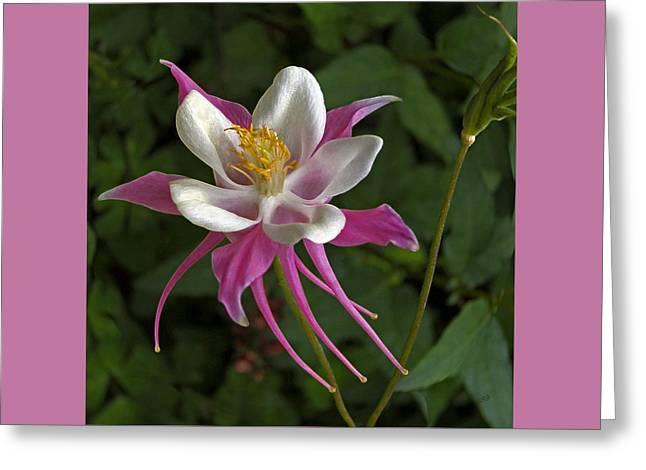 Pink Columbine Flower Greeting Card by Ben and Raisa Gertsberg