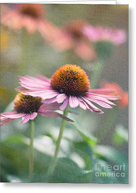 Cone Flowers Greeting Cards - Pink Cone Greeting Card by Rebecca Cozart