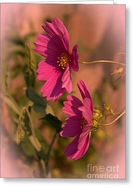 Cosmos Mixed Media Greeting Cards - Pink Cosmos  Greeting Card by Marjorie Imbeau