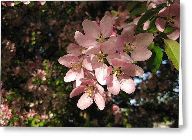 Crabapple Cards Greeting Cards - Pink Crab Apple Tree Greeting Card by Elisabeth Ann