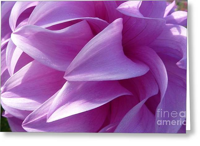 Dinner-plate Dahlia Greeting Cards - Pink Dahlia Blossom Greeting Card by Susan Garren