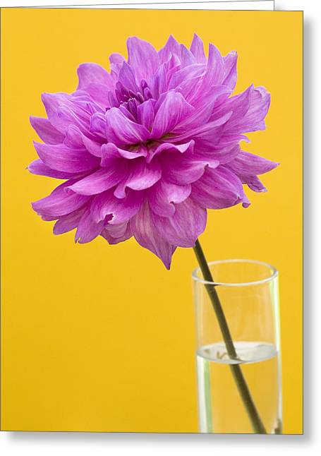 Sun Room Digital Art Greeting Cards - Pink Dahlia in a Vase against Yellow Orange Background Greeting Card by Natalie Kinnear