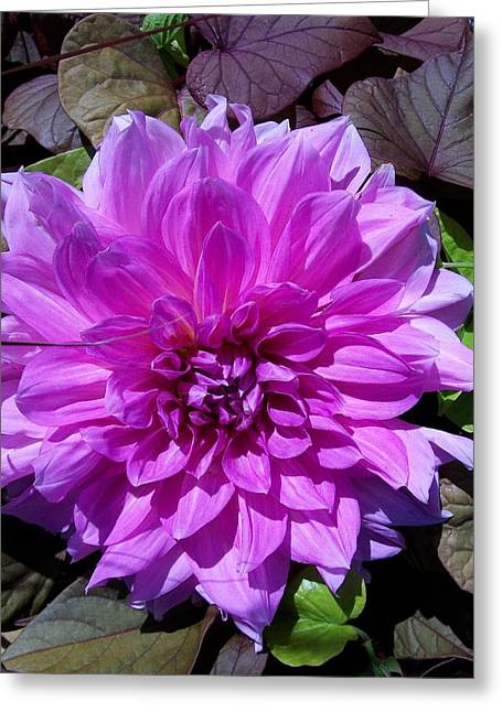 Potato Print Paintings Greeting Cards - Pink Dahlia  Greeting Card by Sharon Duguay