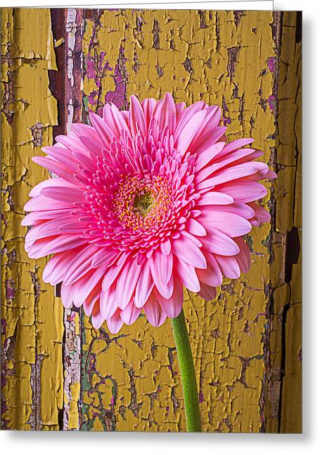 Thin Greeting Cards - Pink Daisy Against Yellow Wall Greeting Card by Garry Gay
