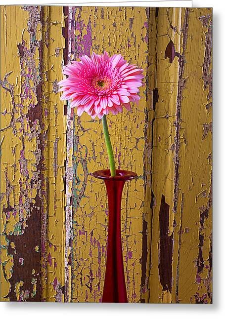 Daises Greeting Cards - Pink Daisy In Thin Red Vase Greeting Card by Garry Gay