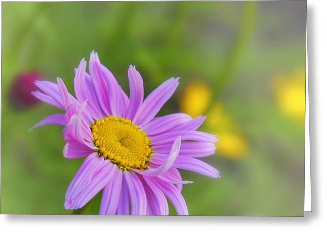 Pink Daisy Greeting Card by Veikko Suikkanen