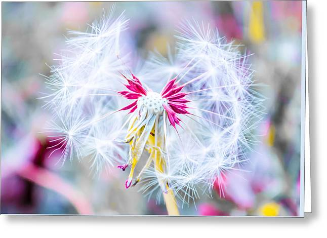Creative Photography Greeting Cards - Magic in Pink Greeting Card by Parker Cunningham