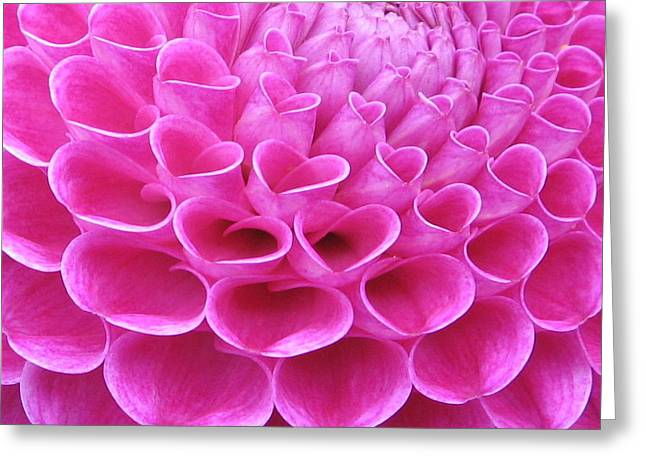 Pink Delight Greeting Card by Brian Chase