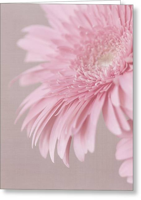 Textured Floral Greeting Cards - Pink Delight Greeting Card by Kim Hojnacki