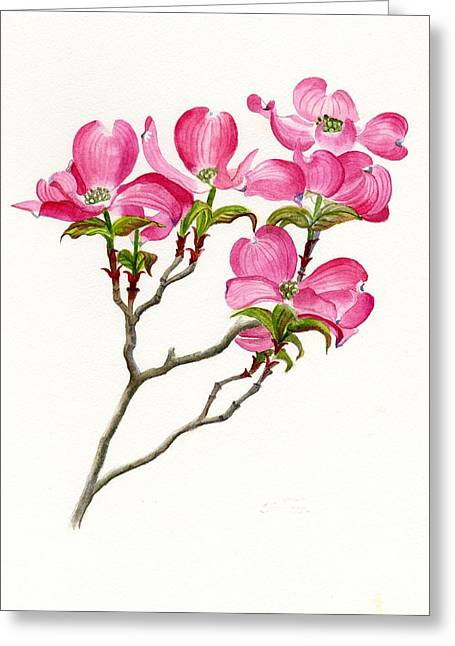 Dogwood Greeting Cards - Pink Dogwood Array Greeting Card by Sharon Freeman
