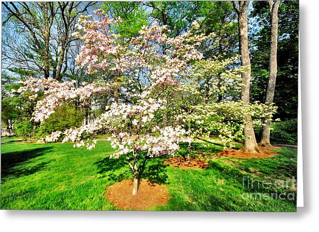 Pink Dogwood Greeting Card by Donald Groves