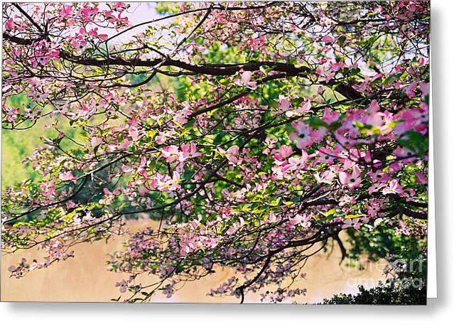 Emerging Artist Greeting Cards - Pink Dogwood I Greeting Card by Anita Lewis